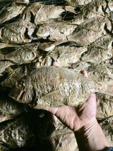 明石産鯛節
